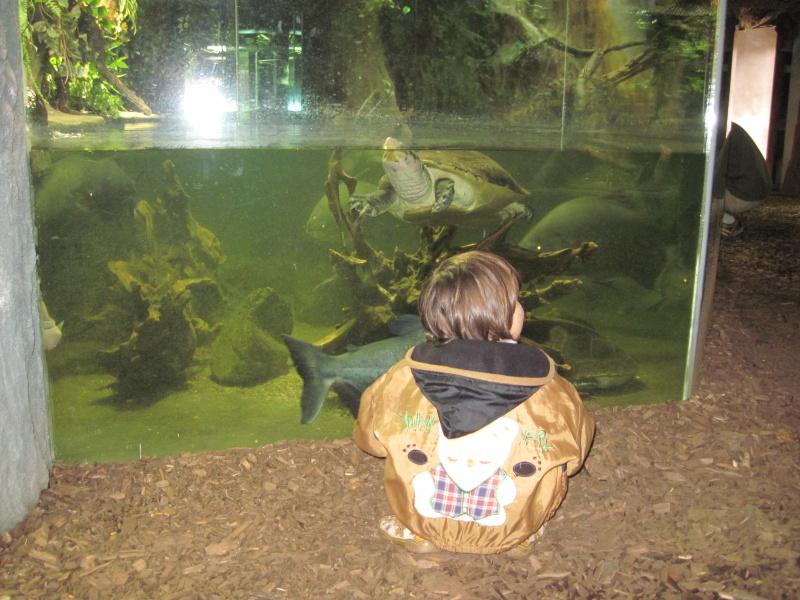 Monička s rybami a želvou