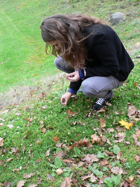 Katka sbírá sedmikrásky