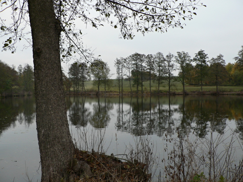 Rybník za Vescem